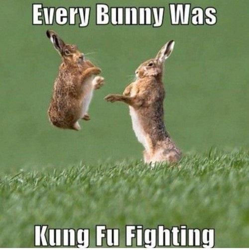 every-bunny-was-kung-fu-fighting-500x521.jpg