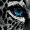 Iron_Leopard